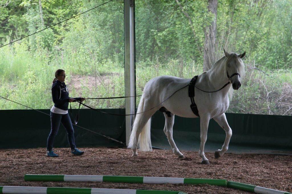 Vertrauen zwischen Manager und Pferd im Seminar