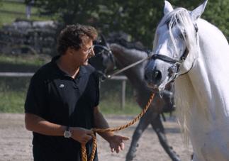 Teilnehmer in Interaktion mit dem Pferd