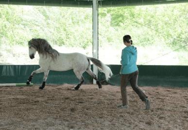 Pferd in Action