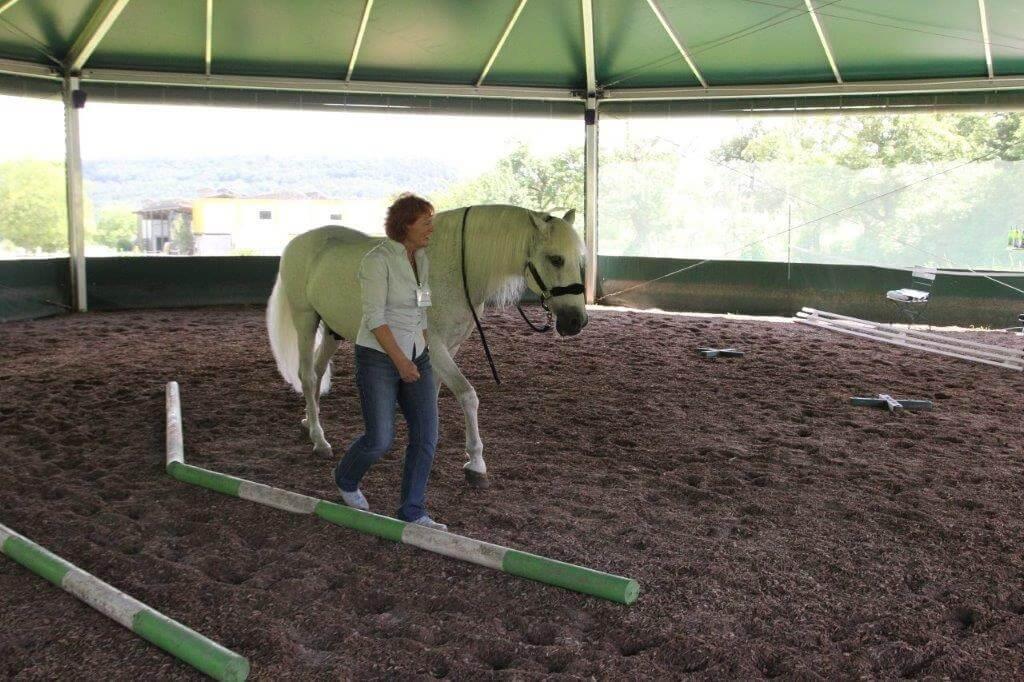 Seminarteilnehmerin führt Pferde mit Körpersprache
