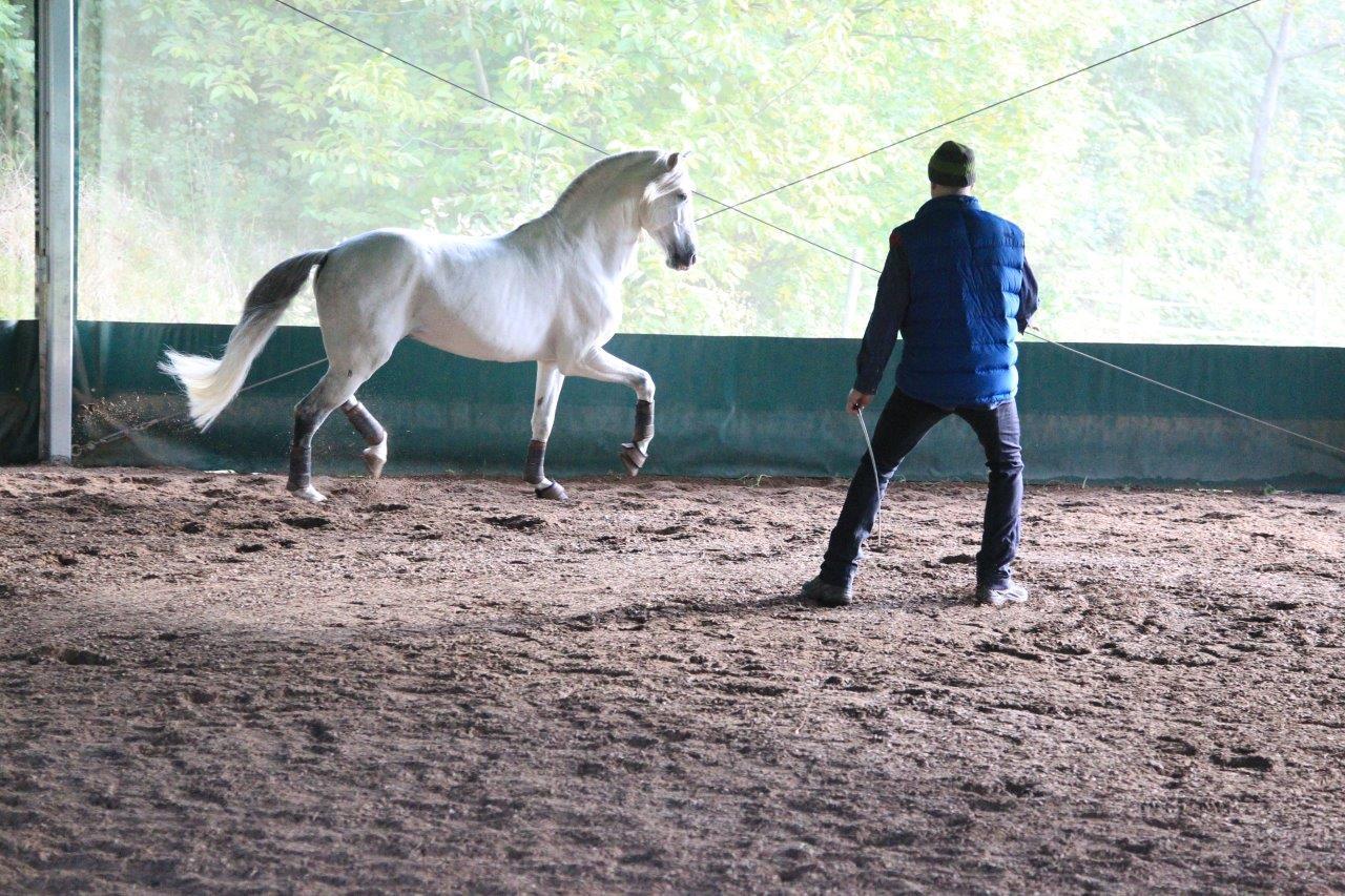 Pferde durch Körpersprache bewegen