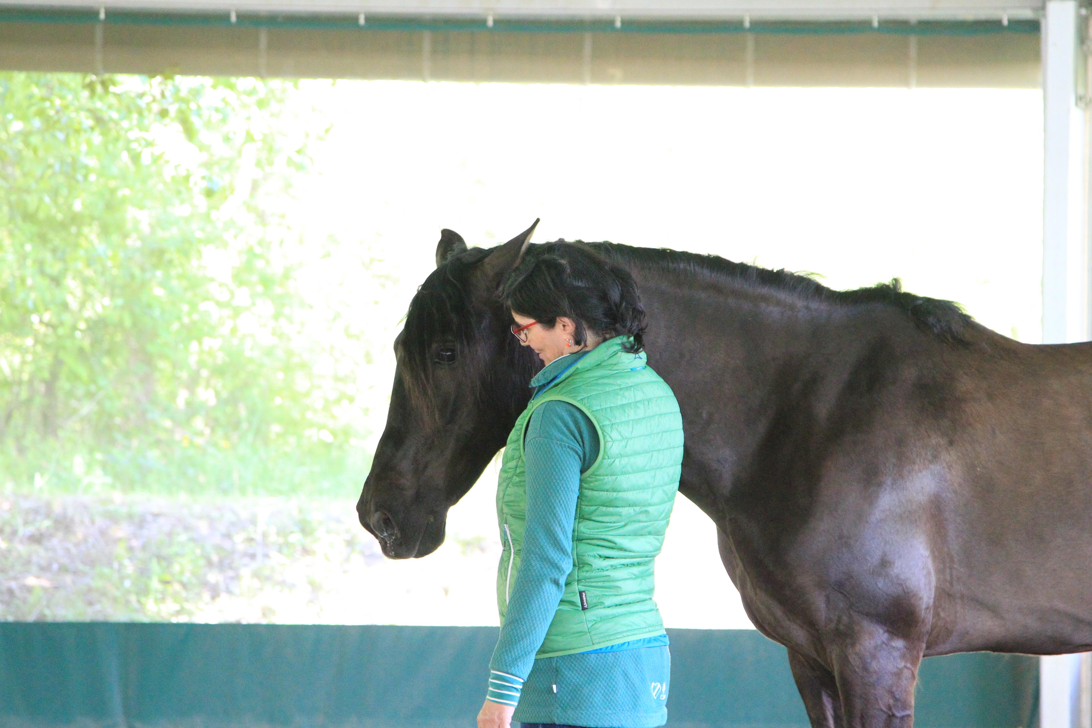 Mit dem Pferd kommunizieren