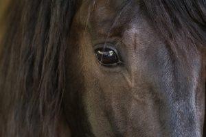 Braunes Pferd Nahaufnahme