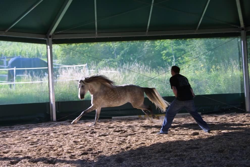 Pferde spiegeln das menschliche Verhalten