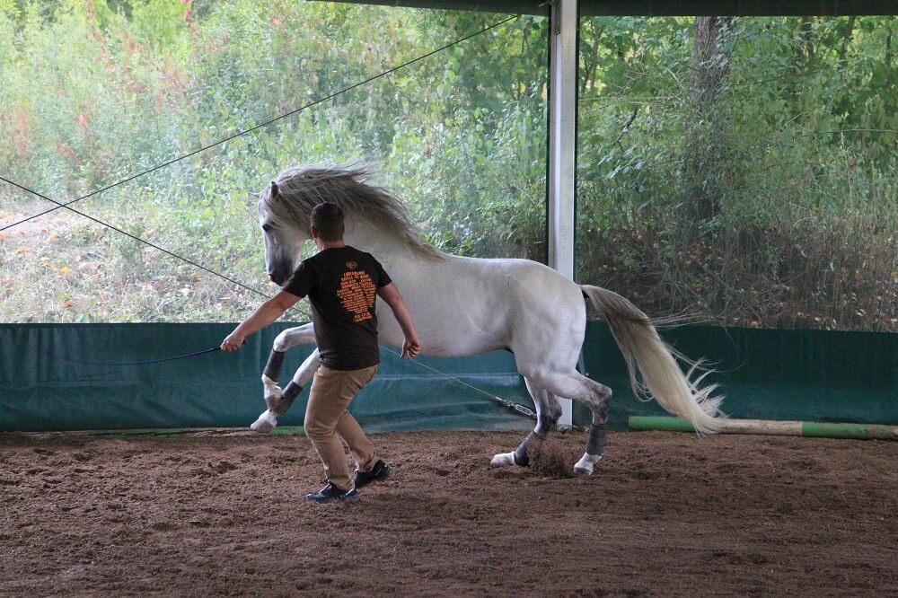 Führung mit Pferden