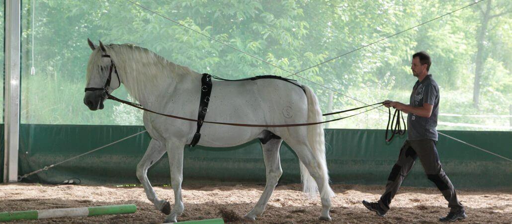 Pferd führen